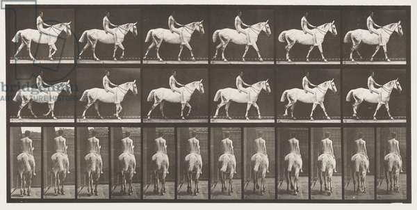 Plate 581. Walking; Bareback; Rider,43, Nude; Light-Gray Horse Smith, 1885 (collotype on paper)