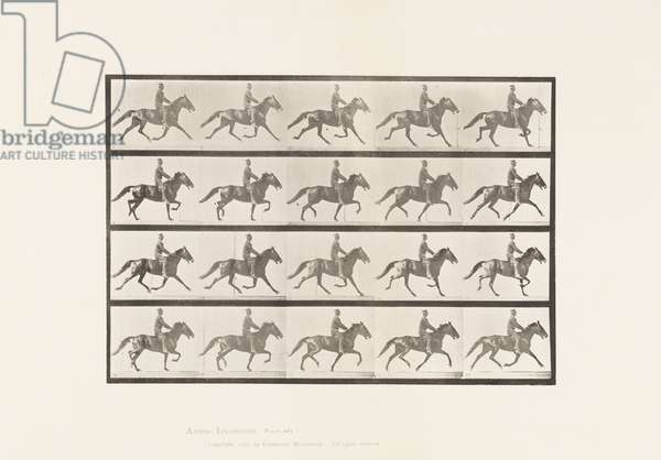 Plate 591. Rocking (Pacing): Saddle; Brown Horse Pronto, 1885 (collotype on paper)