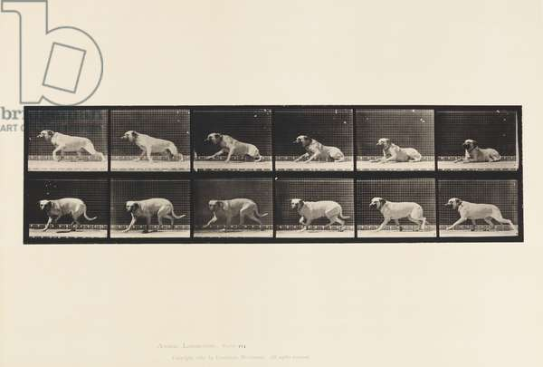 Plate 714. Dog; Aroused by a Torpedo; Mastiff-Smith, 1885 (collotype on paper)