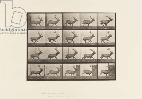 Plate 693. Elk, Galloping, 1885 (collotype on paper)