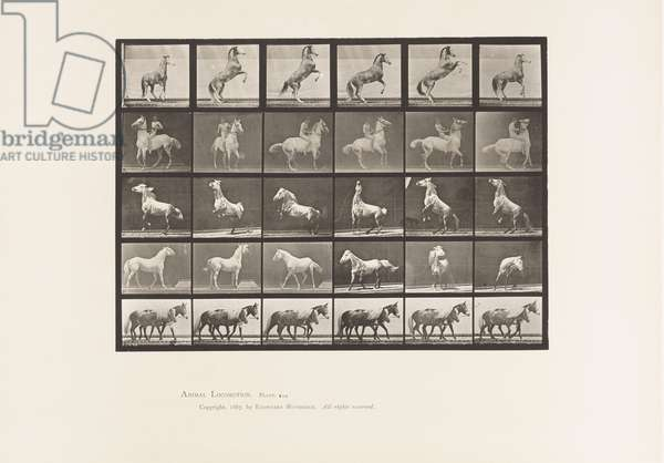 Plate 652. A, B, C, D, E, Horses Rearing, etc., 1885 (collotype on paper)