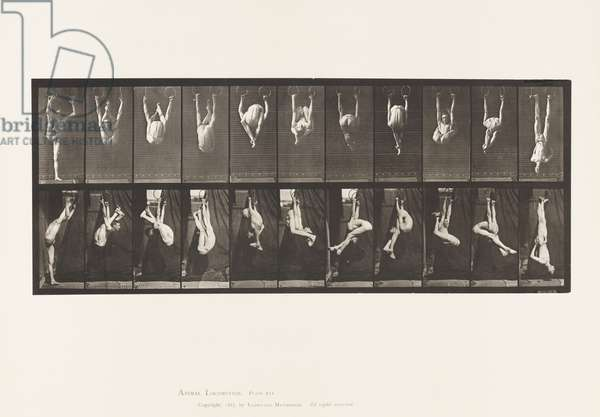 Plate 512. Contortions on Rings, 1872-85 (collotype on paper)