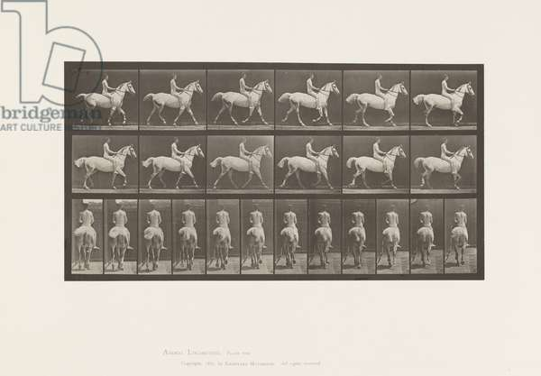 Plate 602. Trotting;Bareback; Rider,43,Nude;Light-Gray Horse Smith, 1885 (collotype on paper)