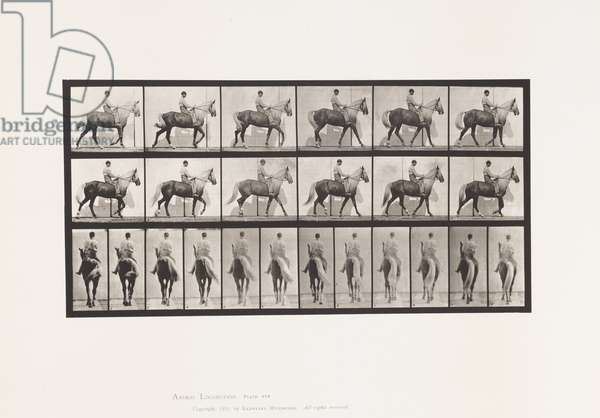 Plate 653. Walking; Saddle; Lame, Right Front Foot;Horse-Buckskin, 1885 (collotype on paper)