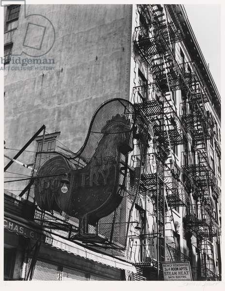 Rooster , neg. 1937, printed 1979 (gelatin silver print)