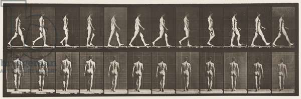 Plate 2. Walking, 1872-85 (collotype on paper)
