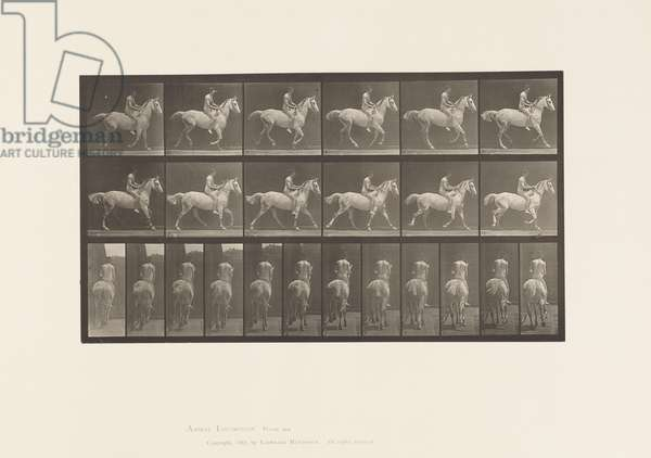 Plate 623. Canter; Bareback; Rider, 43, Nude; Gray Horse Smith, 1885 (collotype on paper)