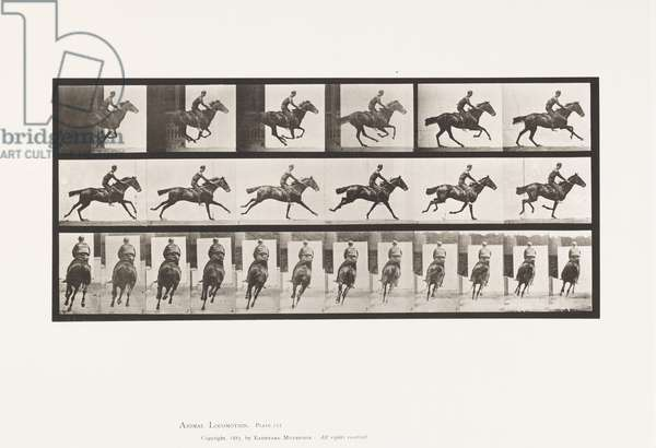 Plate 633. Gallop; Saddle; Thoroughbred Bay Horse Bouquet, 1885 (collotype on paper)