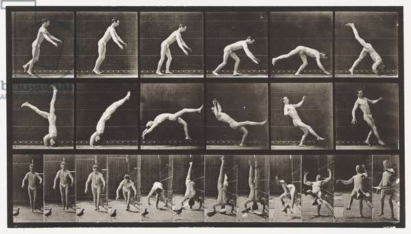 Plate 365. Headspring, A Flying Pigeon Interfering, 1872-85 (collotype on paper)