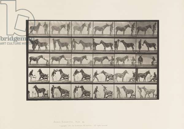 Plate 664. Mule; Various Performances; at a Table, etc., 1885 (collotype on paper)