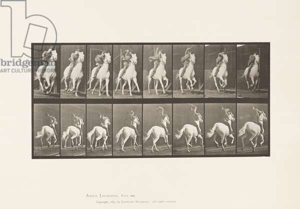 Plate 634. Gallop; Saddle; Gray Horse Dan, 1885 (collotype on paper)