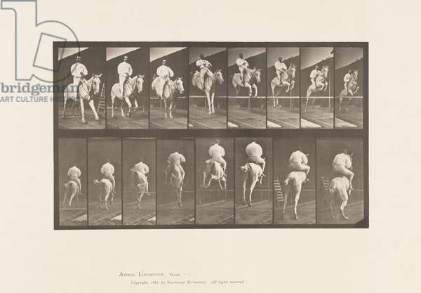 Plate 644. Jumping a Hurdle; Saddle; Clearing and Landing, 1885 (collotype on paper)