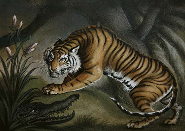 Tiger and Crocodile, c.1810 (sand-picture on board)