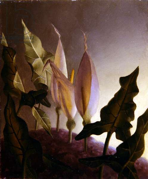 White Arums (a pair), 1951 (oil on canvas and oil on board)