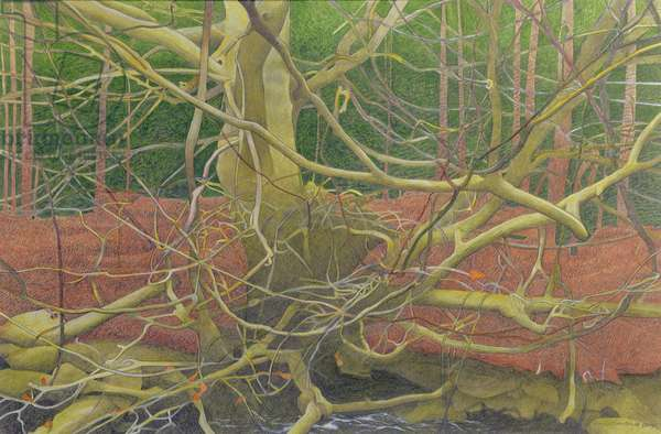 On the Banks of the River Bedelder, 2004 (pastel, pencil and gouache on paper)