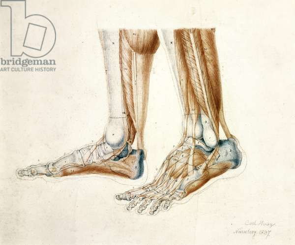 Anatomical Drawing of a Man's Feet, 1837 (black & red chalks on paper)