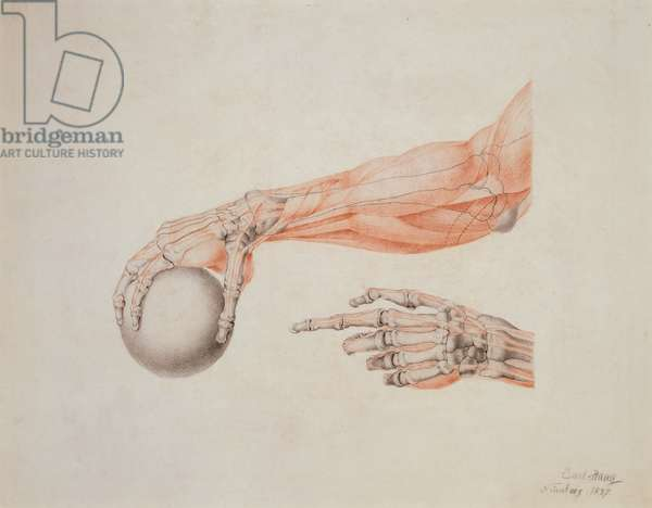 Anatomical Hands, 1837 (coloured chalks on paper)