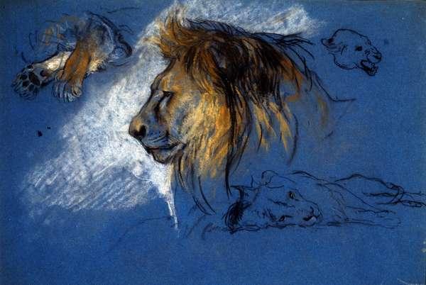 Study of a Lion, c.1905 (pastel on blue paper)