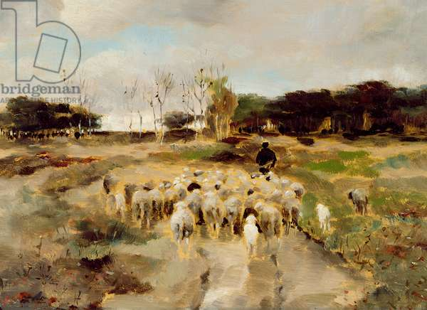 Sheep Flock (oil on paper)