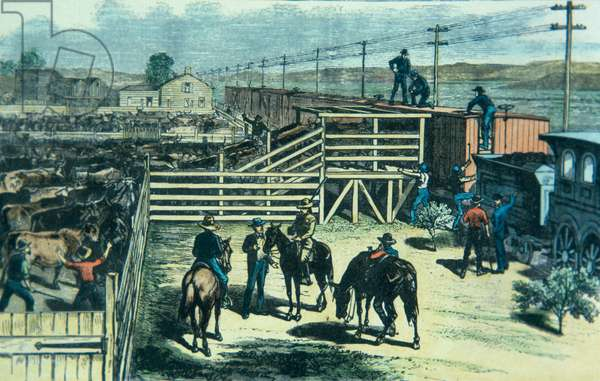 Loading Texas cattle onto a train at Abilene railhead, Kansas, c.1870 (colour litho)