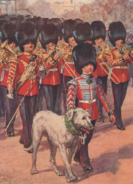 The band and wolfhound mascot of the Irish Guards wearing the shamrock on St Patrick's Day (colour litho)