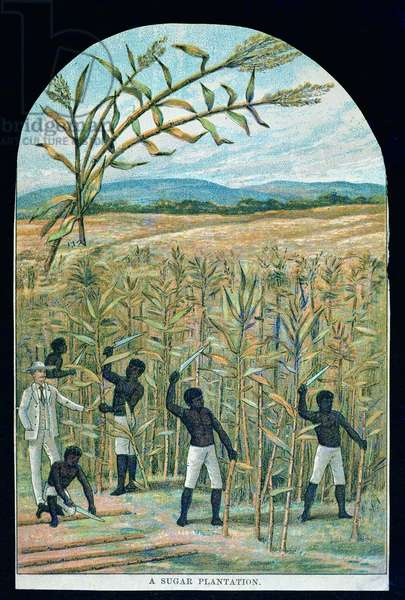 Cutting cane on a sugar plantation in America's Deep South (colour litho)