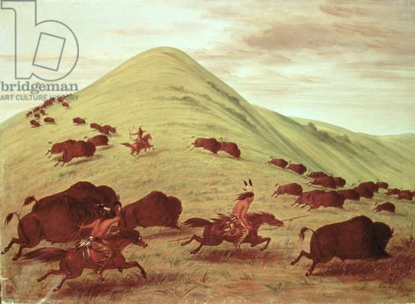 Sioux Indians hunting buffalo, 1835 (oil on canvas)