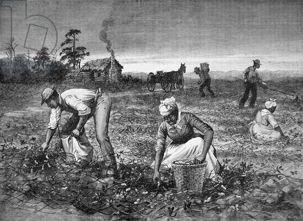 'The Goober-gatherers', 1890 (engraving)