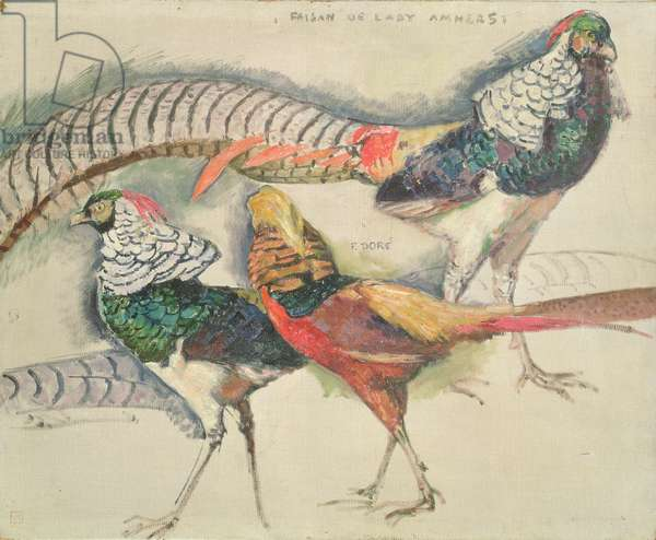 Lady Amherst's Pheasant (oil on canvas)