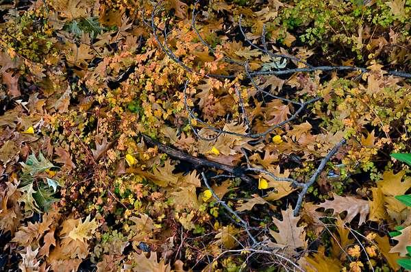 Fallen Autumn leaves, petals and twigs on ground, Prague, Czech Republic(photo)