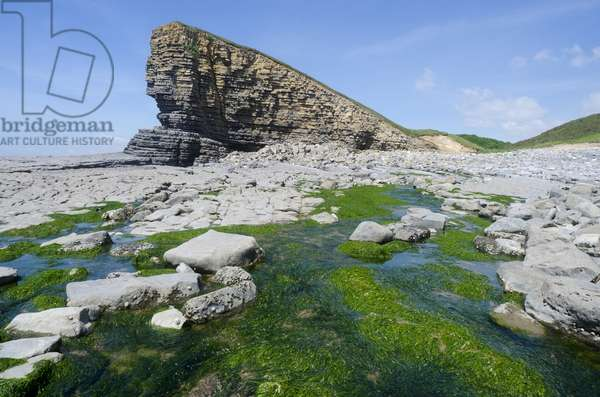 Glamorgan Heritage Coast: Liassic Limestone and Shale Seacliffs, Nash Point, Vale of Glamorgan, West of Llantwit Major, South Wales, UK (photo)