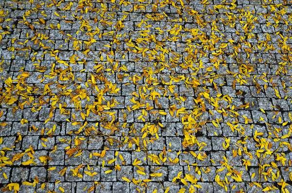 Fallen autumn leaves on city street paved with 'setts', Karlin, Prague, Czech Republic(photo)
