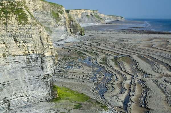 Glamorgan Heritage Coast: Blue Lias and Shale Sea Cliffs, Vale of Glamorgan, South Wales, UK (photo)
