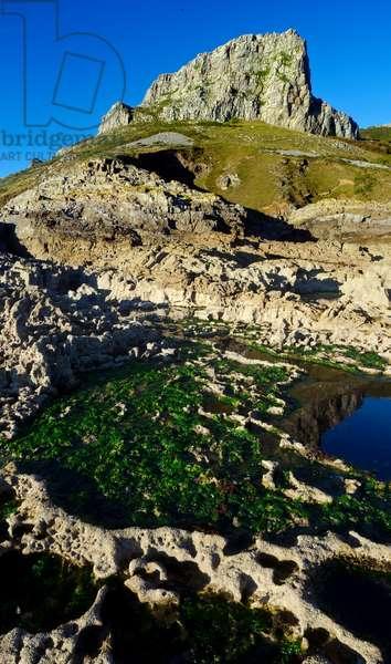 Limestone seacliffs and rockpool with seaweed, Gower, South Wales, United Kingdom (photo)