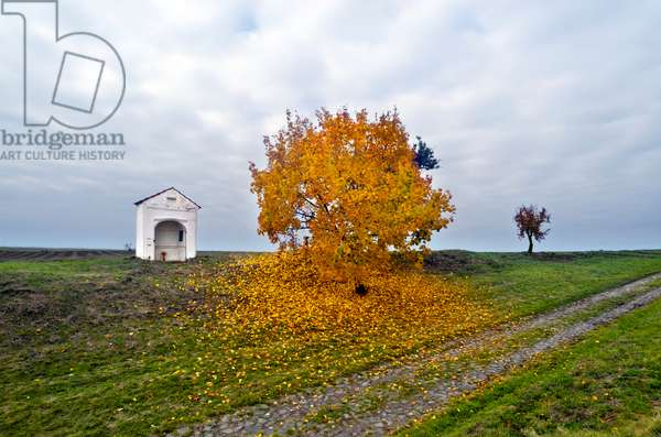 Wayside Shrine in countryside next to Autumn maple tree, Usti nad Labem Region, North-Western Bohemia, Czech Republic(photo)