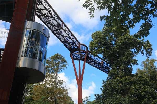 Kew Tree Walk (photo)