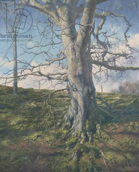 Tree Study (Winter), 2016 (oil on canvas)