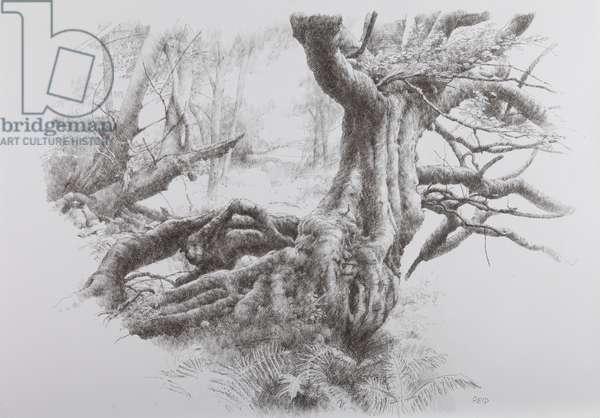 The Great Tree, Study, 2012 (pen on board)