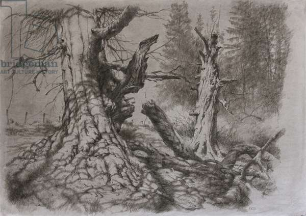 Forest Scene, 2014 (charcoal and ink on paper)