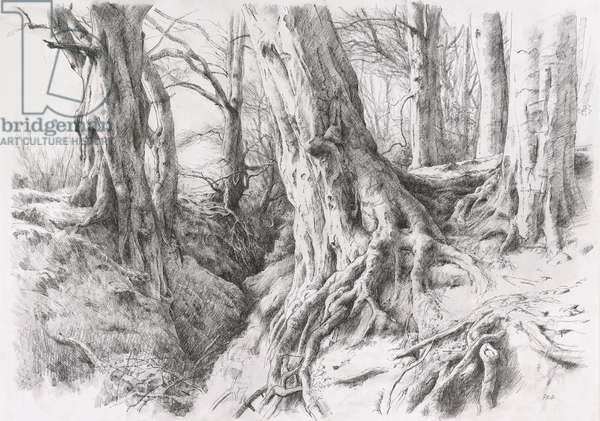 Mauricewood Tree Study (pen and charcoal on paper)