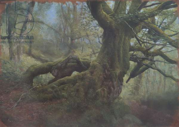 The Great Tree, Study, 2012 (oil on canvas paper)