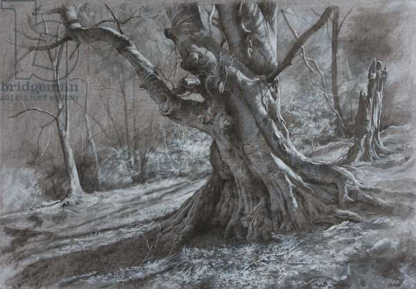 Tree Study (Spring), 2018 (acrylics & charcoal on board)
