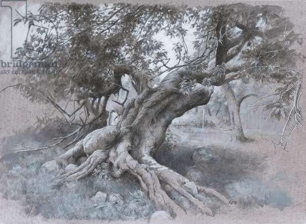 Tree Study (Summer), 2016 (ink, charcoal & arcylic on board)