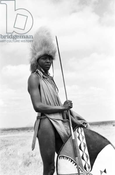 Portrait of a Maasai moran (warrior), standing, holding a spear and shield, and wearing a lion's mane headdress, Simanjiro Plain, Tanzania, 1963 (b/w photo)
