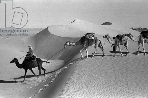 View of Wilfred Thesiger's travelling party trekking in the Uruq al Awarik sands of the Empty Quarter (Rub' al Khali), Saudi Arabia, January 12-18, 1948 (b/w photo)