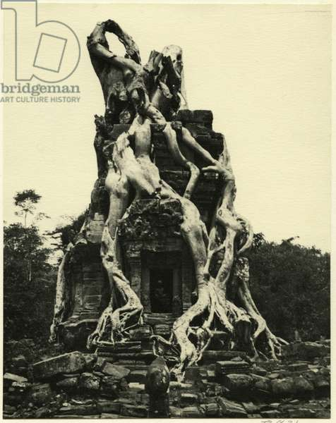 Roots of a tree twisted about sanctuary on Angkor archaeological site, Cambodia, 1937 (bromide print)