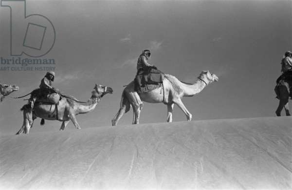 View of two of Wilfred Thesiger's travelling companions, Salim bin Kabina and 'Amair bin 'Omar, riding camels in the vicinity of Ramlat Unayq, Oman, May 1-10, 1948 (b/w photo)