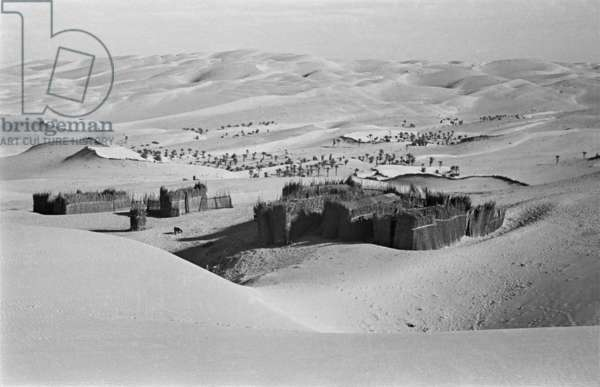 View of 'arish huts at a Bani Yas settlement in the sands of Liwa oasis, United Arab Emirates, November 14–29, 1948 (b/w photo)