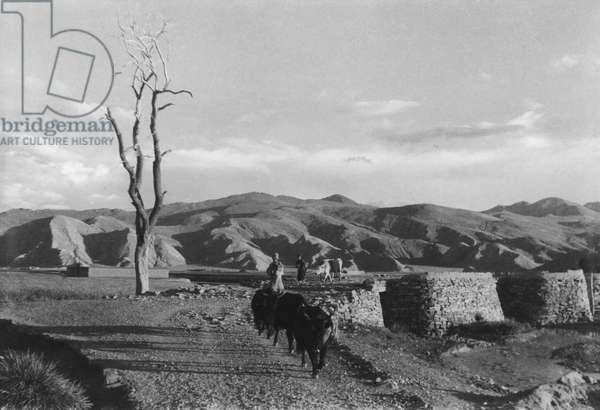 A bridge at Gyantse, Tibet, 12th August 1936 (gelatin silver print)