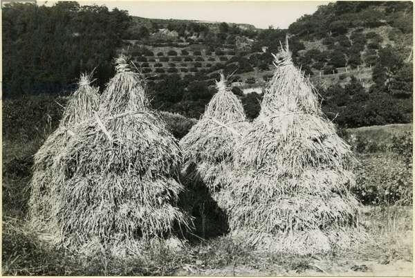Stacked rice straw, Izu Peninsula, Shizuoka, Japan, 1937 (bromide print)
